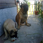 Leo, 17 months old, with Bimba