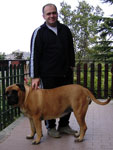 Bullmastiff WONDERFUL VICTORY, 5 years old, with Luca