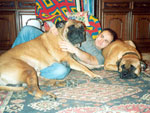 Bullmastiffs ZOLTON and WONDERFUL VICTORY with Luca