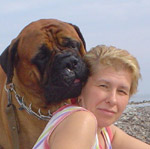 Bullmastiff WELLBRED VIKING, 3 anni